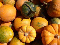 La zucca: uno scrigno di vitamine per i tuoi occhi
